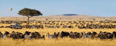A safari through Serengeti National Park embodies a tryst with the wild at its most earthy and beautiful