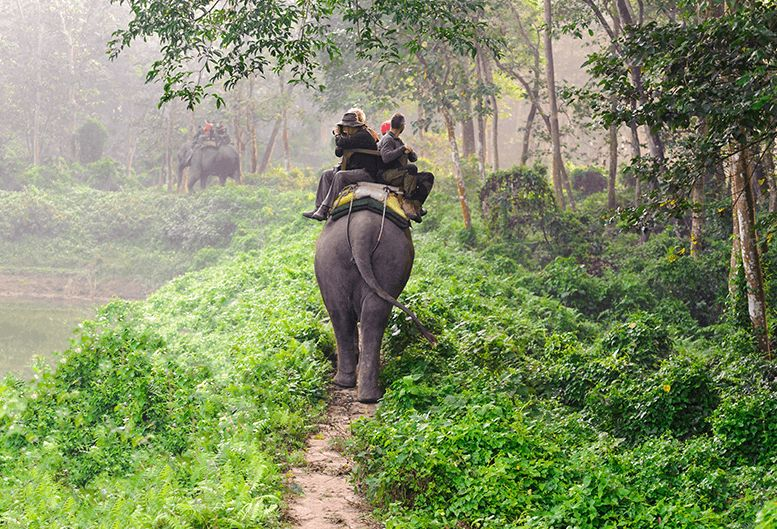 Elephant Safari Experience in Bali