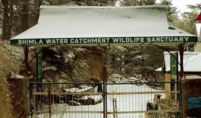 The Water Catchment Sanctuary, Shimla