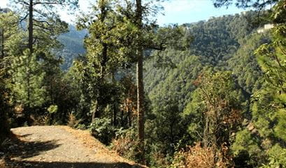 Walk in the Woods at The Oberoi Cecil Shimla