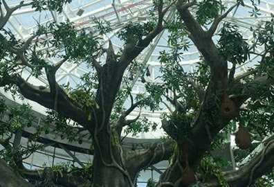 Green Planet 'Rainforest' Visit Experience, The Oberoi Dubai