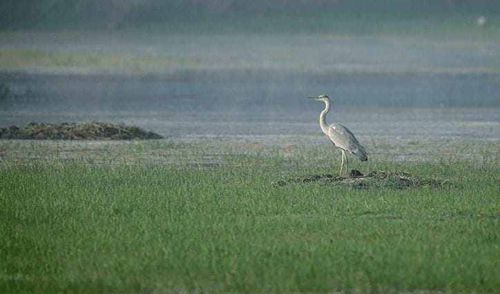 Sultanpur National Bird Sanctuary, Gurgaon