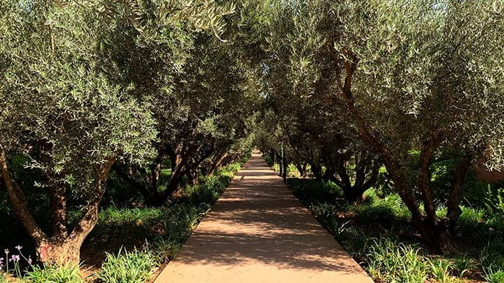Les Jardins des Oliviers Luxury Events Venue at 5 Star Hotel The Oberoi Marrakech