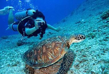 Scuba Diving in Sahl Hasheesh