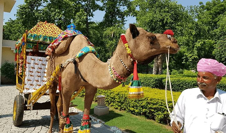 Camel Cart Ride Experience at The Oberoi Vanyavilas Ranthambhore