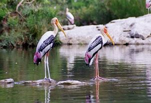 Bird Watching at Surwal Lake Experience