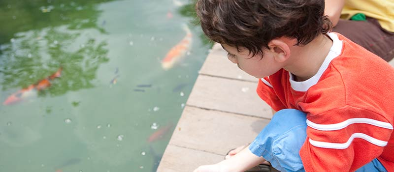 Fish Feeding at The Oberoi, Bali