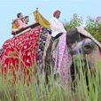 Elephant Safari With a Gourmet Picnic to Naila Fort - The Oberoi Rajvilas, Jaipur