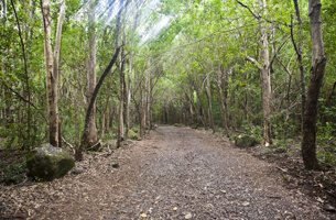 Black River Gorges National Park - Weekend Getaways - The Oberoi, Mauritius