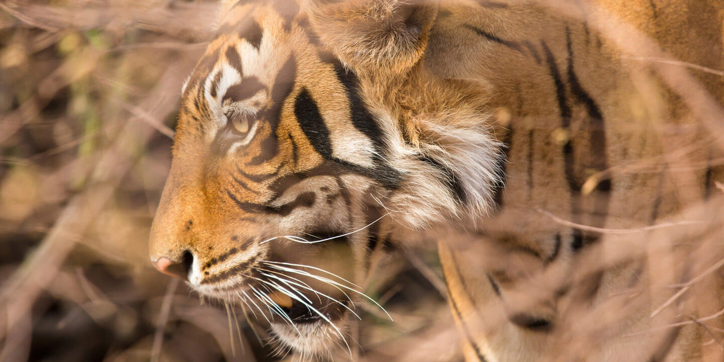 Weekend Getaways in Ranthambhore