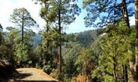 Walk in the Glen Valley Experiencing the View of Dense Rhododendron, Pine Forest & Moutain Stream - The Oberoi Cecil, Shimla