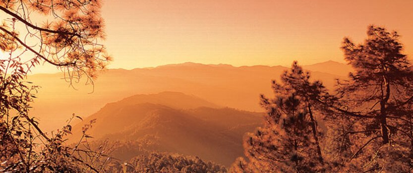 Experience a Breakfast Mid-Way Through The Wild Strawberry Trail in Shimla