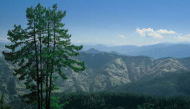 Breathtaking View of Himalayas & Sacred Gangotri From Premier Mountain View Rooms in Shimla